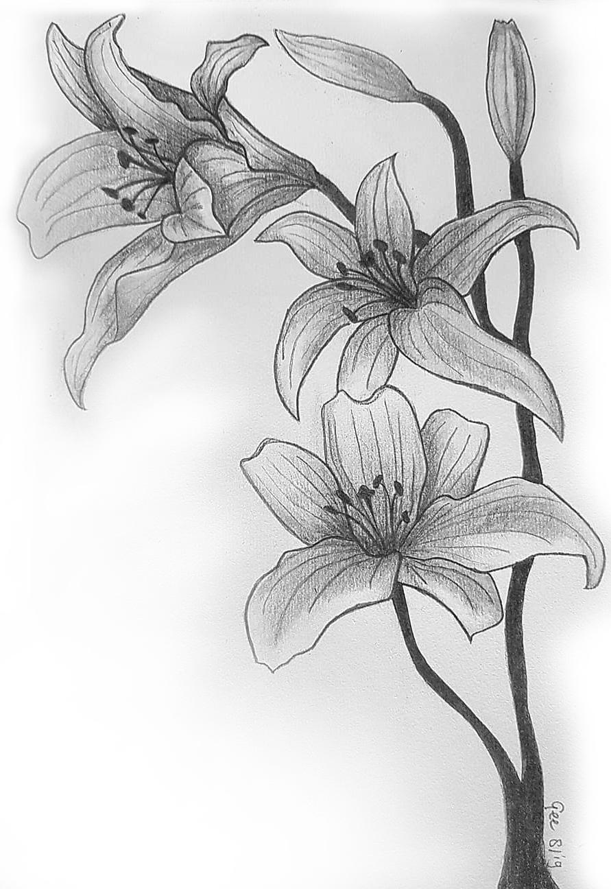 Getekende bloemen met potlood