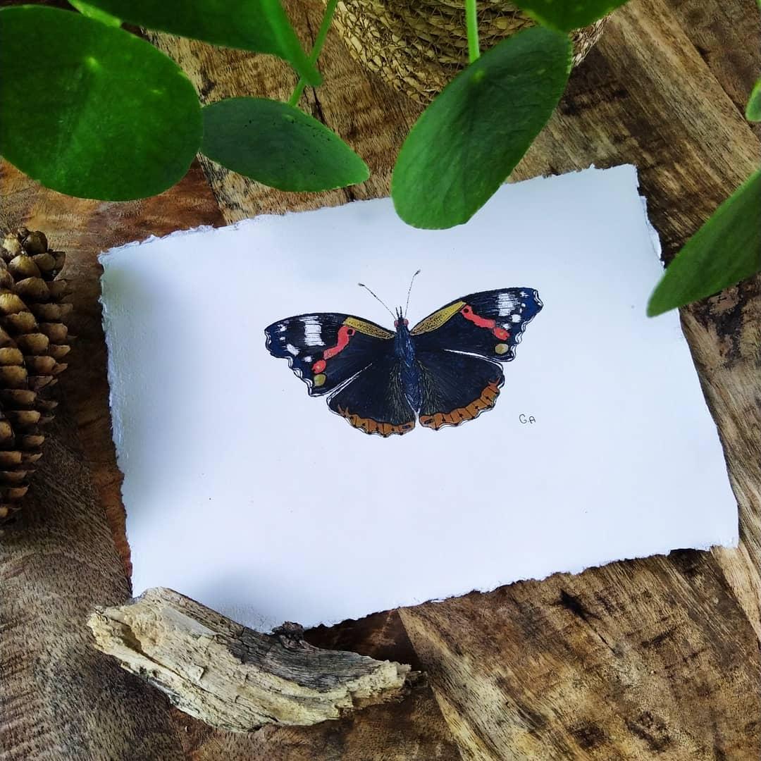 Tekening met waterverf van de Atalanta vlinder met rood, geel en zwart