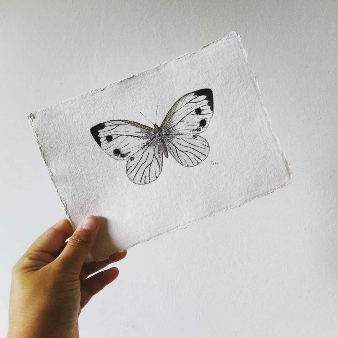 Tekening met waterverf van de dennepijlstaart vlinder