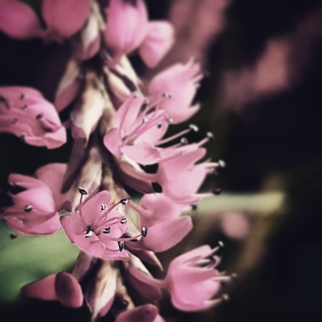 Bloemen in herfst