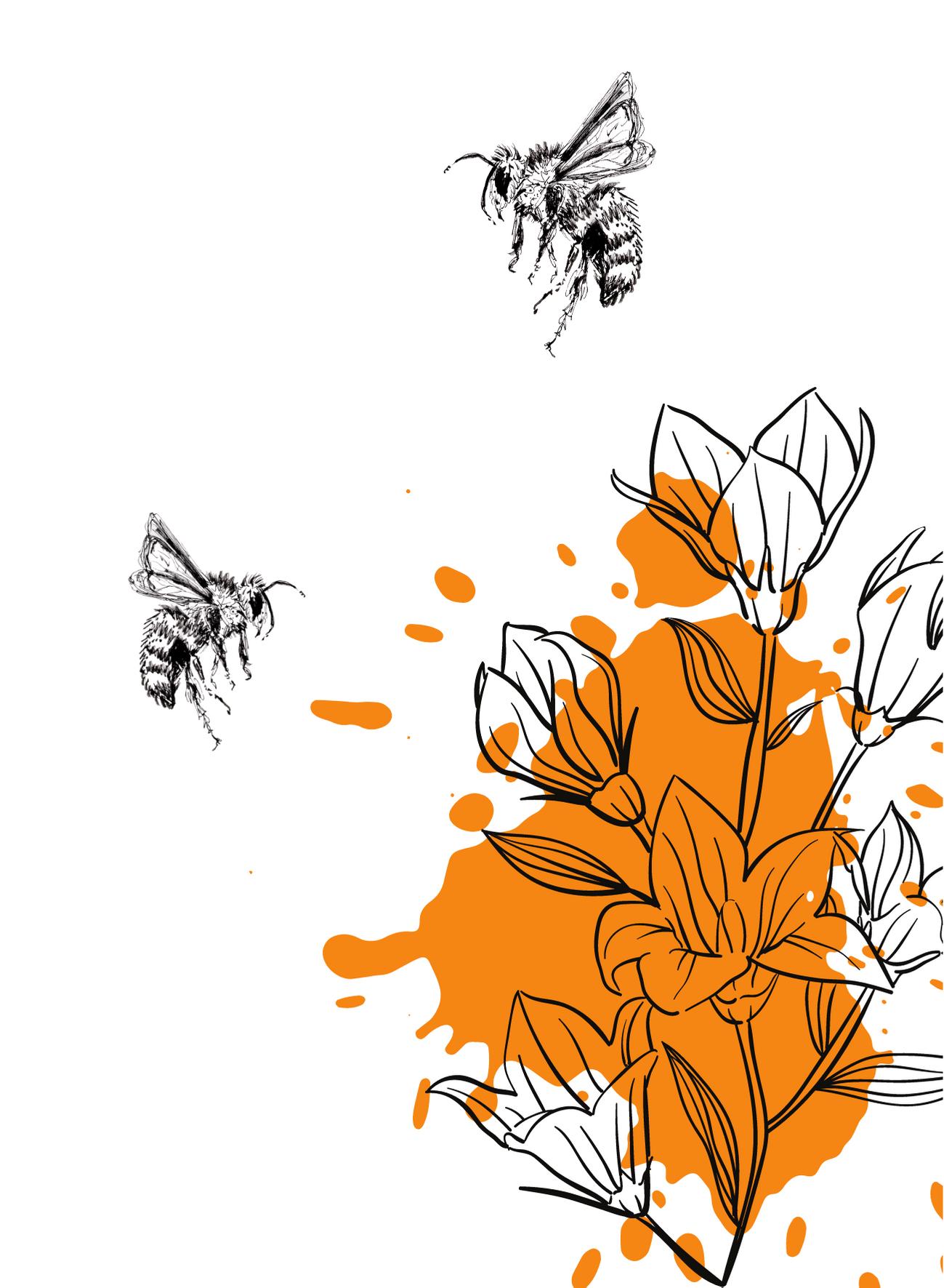 BijenSplash1