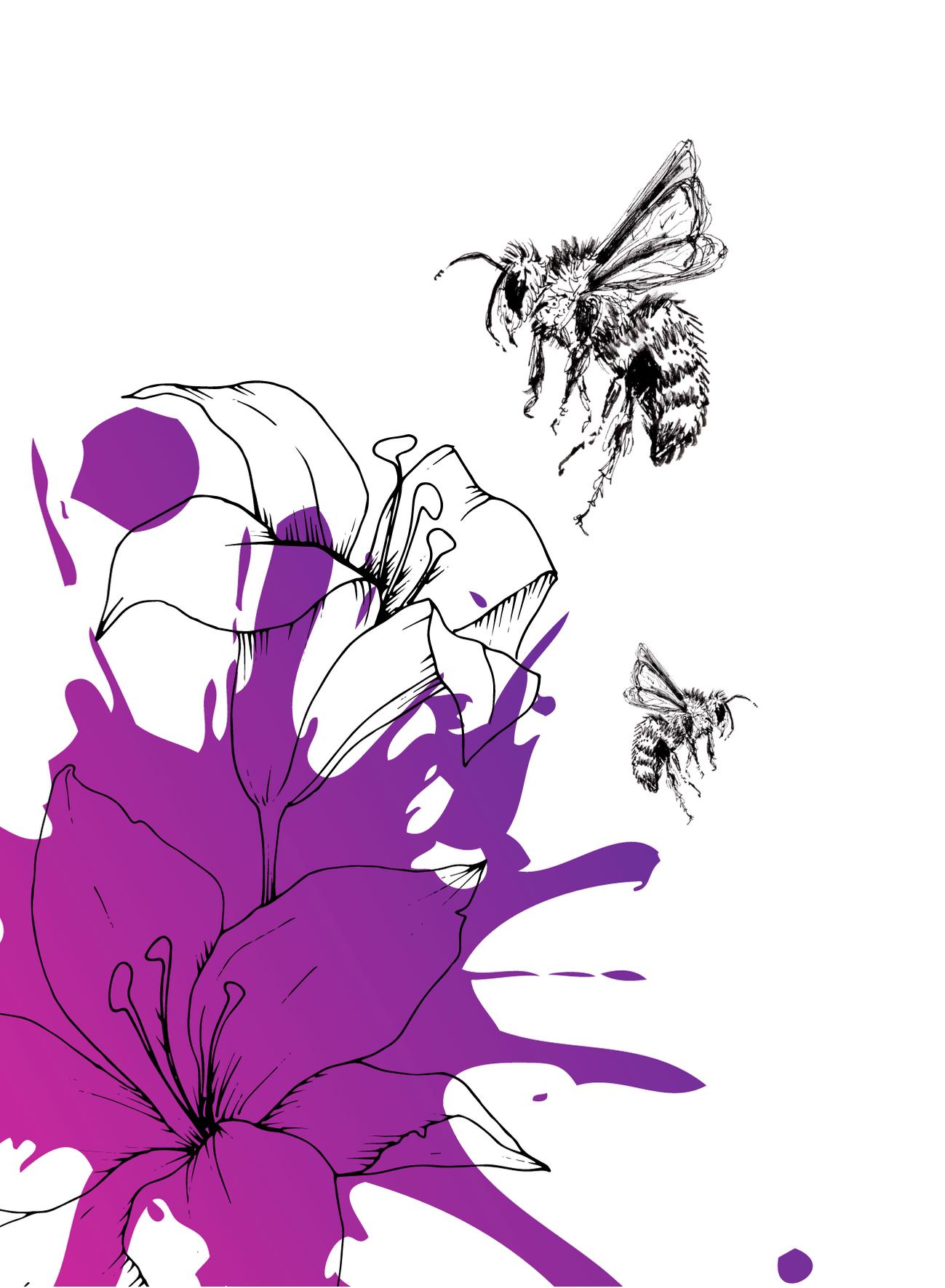 BijenSplash4
