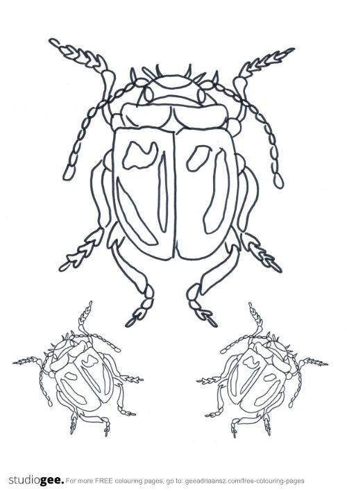 Colouringpage Beetle