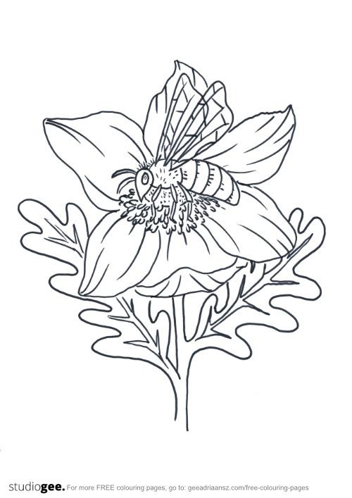 Colouringpage Flower Bee