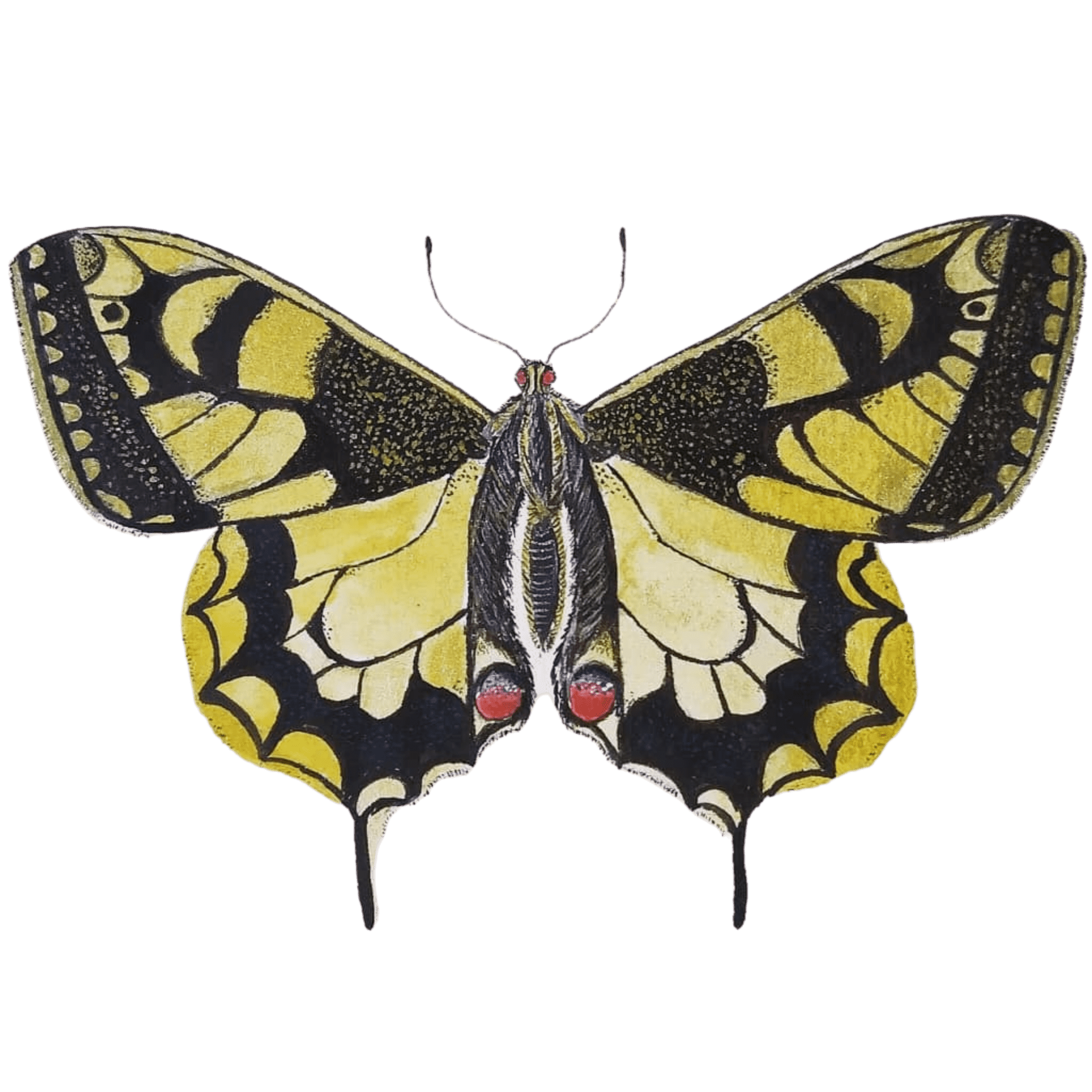 Tekening van de Koninginnepage vlinder met geel en zwart