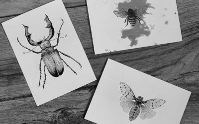 Insect postcards