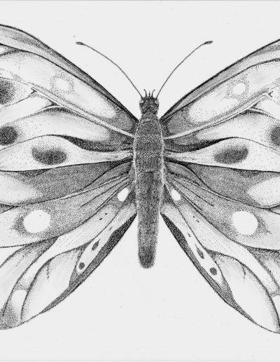 Tekening van een grote vlinder