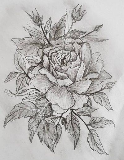 Tekening van de Rosa lucida