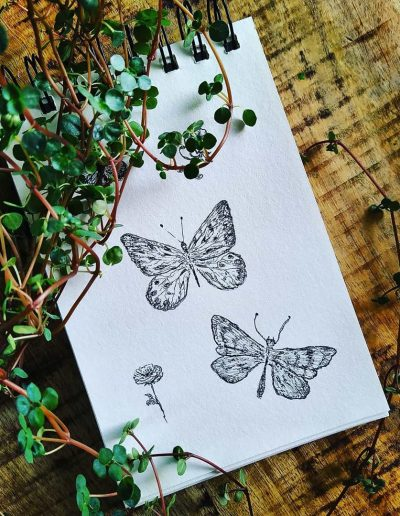 Vlinders getekend