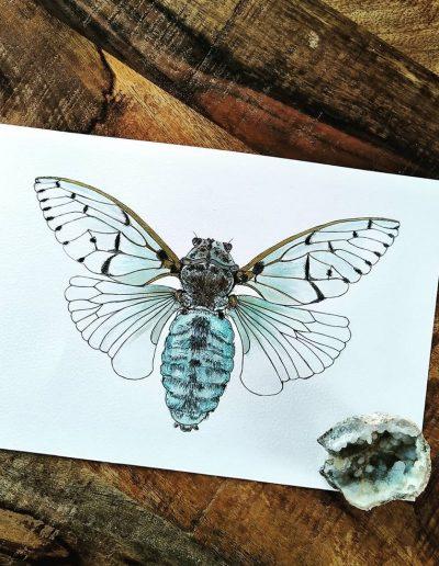 White ghost cicada