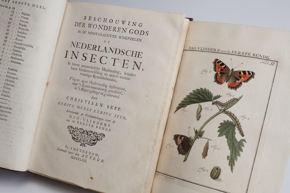 Beschouwing der wonderen Gods in de minstgeachtte schepzelen. Of Nederlandsche insecten